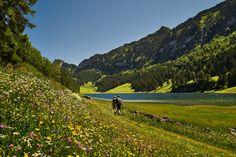 https://flic.kr/p/Co1HA7 | Swiss Landscape | Hikers in the Swiss Alps