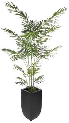 Beachcrest Home Artificial Areca Palm Tree Floor Plant in Planter Base