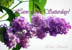 Happy Sabbath, Happy Saturday, Seasons, Plants, Purple, Seasons Of The Year, Plant, Viola, Planets