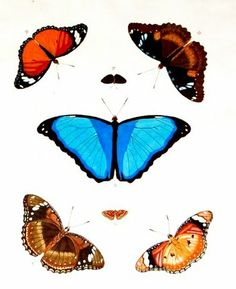 lots of free butterfly printables and other things