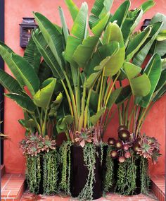 37 Cool Low Maintenance Garden Design Ideas The Effective Pictures We Offer You About tropical garde Tropical Garden Design, Tropical Landscaping, Tropical Plants, Garden Landscaping, Landscaping Ideas, Landscaping Software, Small Tropical Gardens, Landscaping Contractors, Privacy Landscaping