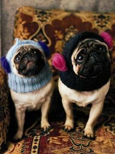 Animals That Make And Wear Yarn On Pinterest