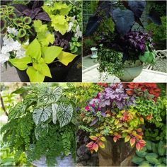 24 Stunning Container Garden Planting Designs How to create beautiful shade garden pots using easy to grow plants with showy foliage and flowers. And plant lists for all 16 container planting designs! - A Piece Of Rainbow Hanging Plants Outdoor, Plants For Hanging Baskets, Outdoor Planters, Indoor Plants, Outdoor Landscaping, Diy Solar, Garden Fountains, Garden Pots, Easy Garden