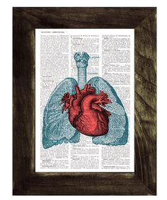 Heart lungs anatomy