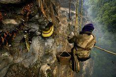 Honey hunting  #3TN Travel Tour Trek Nepal