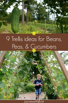 Vegetables that Climb & Sprawl Trellis Options for Your Garden is part of Cucumber gardening - Growing vegetables vertically makes room for more garden crops! Here are 9 trellis options for beans, peas, and cucumbers for you to try in your garden! Bean Trellis, Diy Trellis, Garden Trellis, Trellis Ideas, Tomato Trellis, Trellis Fence, Herbs Garden, Garden Shrubs, Terrace Garden