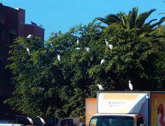 Miasteczko w mieście - El Jadida