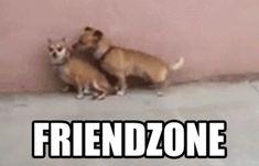 fail lol dogs humor friendzone