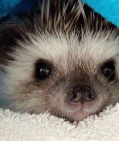 Hedgehog A Day Keeps The Sadness Away..