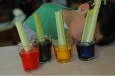 {Celery & Food Coloring Experiment} A classic... too cool.