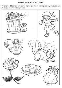 Five Senses Preschool, 5 Senses Activities, Preschool Prep, Kids Learning Activities, Activity Sheets For Kids, Coloring Sheets For Kids, Fruit Coloring Pages, Science Fair Projects, Kids Corner