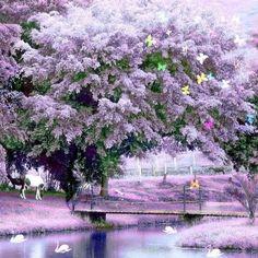 giant purple flowered tree