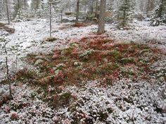 In #Lapland, there are 8 seasons. Would this be wintry autumn?