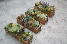 Succulent drawers by Simply Succulent https://www.facebook.com/pages/Simply-Succulent/222665291108990