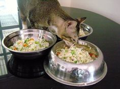 Give occasional treats to your loving pet cat with the best nutritious homemade dishes, rather than serving them readymade market foods. There are two reasons: one being emotional and the other is for wellness. Cooking food for your loved ones shows that you care, while at the same time, you would want to see your …