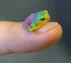 Tiny Rainbow Frog!!!