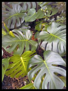 tips on tropical indoor plants