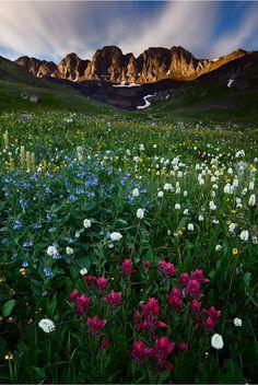 San Juan National Forest, Colorado - wildflower meadow