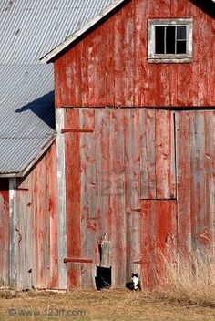 Interesting: Barns were normally painted red because red was the cheapest paint to buy. When you would see a white one from the road the other side you didn't see was often painted red.