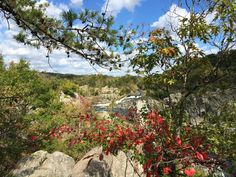 Here are 8 Great Fall Hikes in Northern Virginia, perfect when the weather turns cooler and dryer, and the foliage puts on a show. Several can be combined with a Virginia winery stop.
