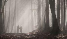 *INTO THE MIST (bei Andechs/Erling, 23. November 2014   [ Nikon D300   AF-S Nikkor 16-85mm f/3.5-5.6G VR   1/90sec f/6.7 @ 85mm   Matrixmessung +1,0LW   ISO 200 ] )