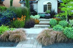 A beautiful entrance way garden with Kniphofia, Carex, Euphorbia, and a tall ornamental grass.