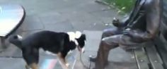 Silly Dog Just Can't Understand Why Statue Doesn't Want To Play A Game Of Fetch****** LOVE LOVE LOVE******* I want to be this dogs pet-parent!!