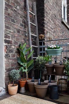 Gemüse auf dem Balkon anbauen - www.craftifair.com
