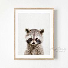 Baby Raccoon Print, Nursery Art, Baby Animal, Woodland Nursery Decor, Baby Animal Art by Amy Peterson