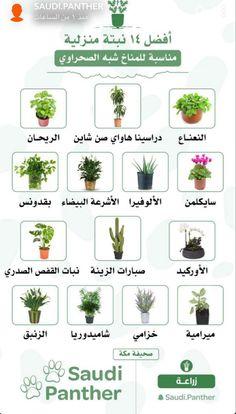 Flowering House Plants, Tiny Garden Ideas, Flowers Last Longer, Container Herb Garden, Farm Projects, Backyard Garden Design, Cactus Flower, Garden Crafts, Aquaponics