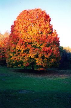 stayhungry-stayfree:  autumn (by Philophilia)