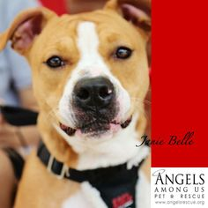 Petfinder  Adoptable | Boxer | Dog | Alpharetta, GA | Janie Belle -Janie Bell the Boxer mix was pulled from Animal control as a 5 month old puppy who was terrified of the world around her. She lost her foster home when she barked at strangers and didn't like new dogs. She ended up in boarding where she was crate trained and exposed to new faces everyday. She learned to love and respect everyone who took care of her. She met new dogs and learned to socialize with them. She spent...