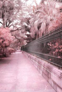 """Savannah Photography, Landscape Architecture, Dreamy Pink Savannah Georgia Photos, Savannah Pink Street, Fine Art Photo 8"""" x 12"""""""