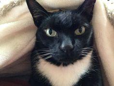 Caturday Welcomes Enrico Caruso (The Cat)