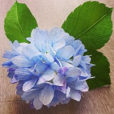 """Imagining a Victorian social situation that would require one to convey, """"Thank you for understanding"""" with this flower. #ajisai #hydrangea"""