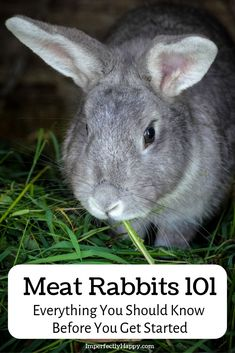 Getting started with meat rabbits! Meat rabbits are a wonderful livestock to own. Easy and budget friendly, they are the perfect backyard livestock. Raising Goats, Raising Rabbits, Meat Rabbits, Rabbit Eating, Country Lifestyle, Rabbit Hutches, Hobby Farms, Chickens Backyard, Survival Skills