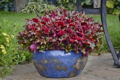 "Coral Bells Container Plants This perennial, also called heuchera, has frothy little flowers that arch over mounded foliage in early summer. Its leaves come in a rainbow of shades from peach to deepest burgundy. ""These are one of my favorites that I've used in hundreds of planters."