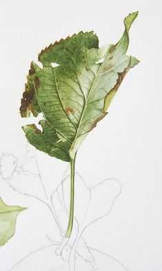 Bramley apple leaf from my early October tutorial