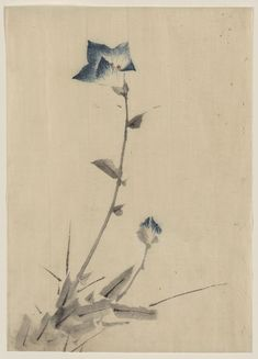 """sumi-no-neko: """" 葛飾 北斎 Katsushika Hokusai - Blue flower blossom and bud at the end of a stalk, between 1830 and 1850 """" Japanese Ink Painting, Japan Painting, Chinese Painting, Japanese Prints, Japanese Art, Blossom Flower, Flower Art, Paintings Tumblr, Art Occidental"""
