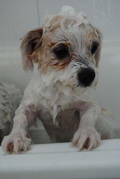 bath time III Bath Time, Dogs, Photography, Animals, Photograph, Animales, Animaux, Pet Dogs, Fotografie