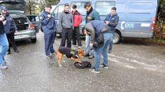 #Refuerzan los operativos antidrogas en Bariloche por los viajes de egresados - Infobae.com: Infobae.com Refuerzan los operativos…