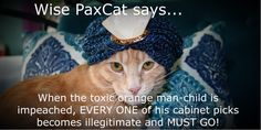 #wisepaxcat #impeach45