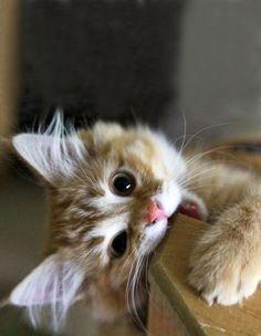 Feisty kitten