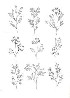 Foliage spray drawings