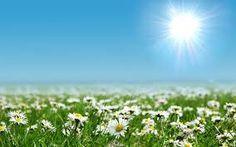 campos con sol - Buscar con Google