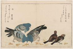 (Japan) Sparrows and Pigeons, from the album Momo chidori Myriad Birds by Kitagawa Utamaro (1753- 1806). woodblock print.
