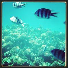 FishFlow