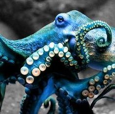 sea life - sea life photography - sea life underwater - sea life artwork - sea life watercolor sea l Underwater Creatures, Ocean Creatures, Kraken Squid, Medusa, Octopus Photography, Sea Beans, Beautiful Sea Creatures, Octopus Art, Life Aquatic