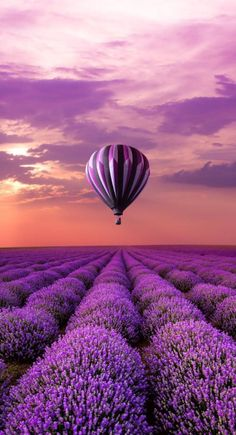 FIELDS OF LAVENDER AND A PURPLE HOT AIR BALLOON. ALL IN MY PURPLE WORLD