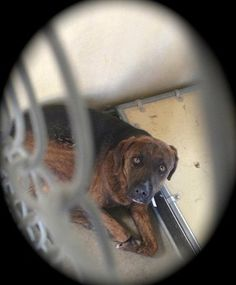 In Lancaster, California Depressed dog waits for the owner who is not coming. Please adopt or rescue this dear pup.